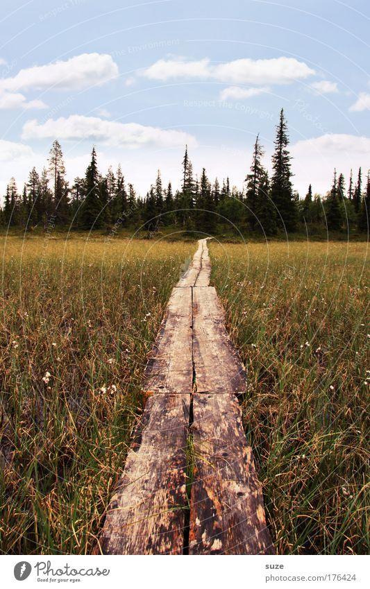Der Weg ist das Ziel Ferien & Urlaub & Reisen Tourismus Ausflug Sommerurlaub wandern Umwelt Natur Landschaft Pflanze Urelemente Himmel Wolken Klima Wald Moor