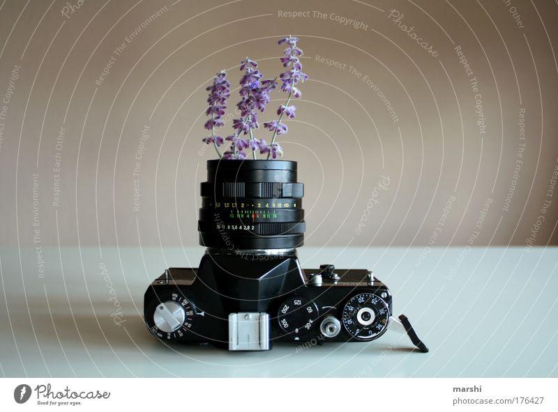 analoges Gewächs ² Farbfoto Innenaufnahme Menschenleer Freizeit & Hobby Natur Pflanze Frühling Sommer alt Kitsch Freude Leidenschaft Lavendel violett Fotokamera
