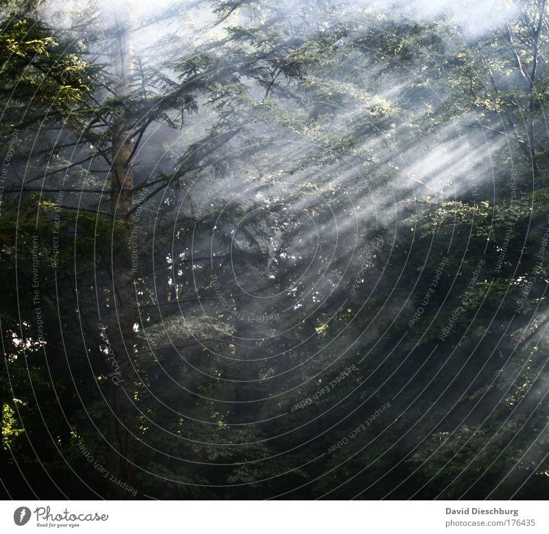 Kettenraucher im Dauereinsatz Natur grün Baum Pflanze Blatt Wald Landschaft Luft Linie Park Nebel Morgen Streifen Licht Dunst Geäst