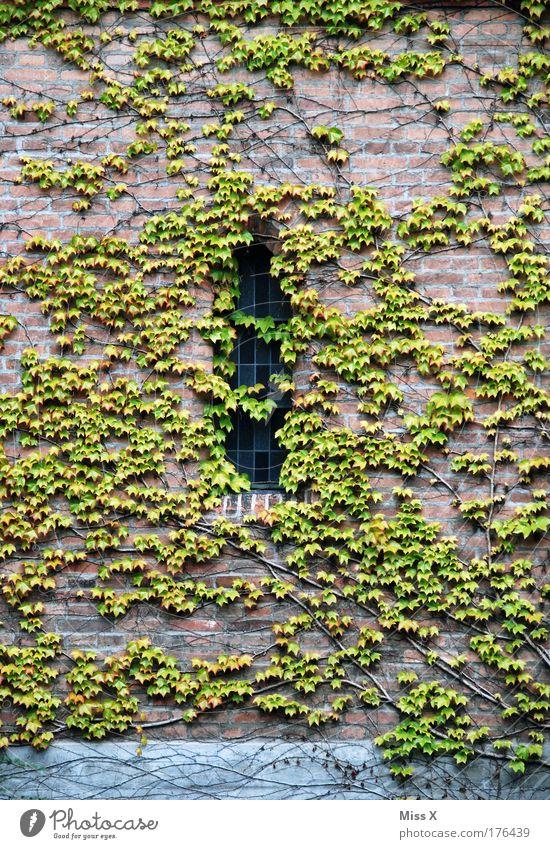 Dornröschen Natur alt Pflanze Sommer Einsamkeit Blatt ruhig Fenster Umwelt Wand Traurigkeit Gefühle Gebäude Mauer Park Wachstum