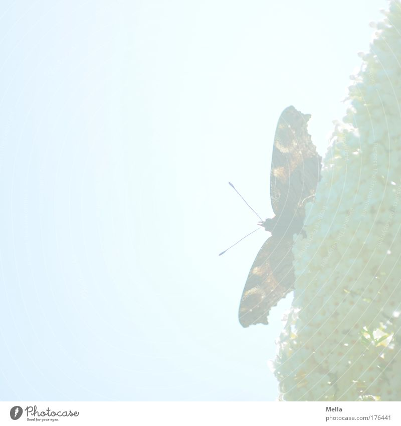 Madame Butterfly Natur schön Himmel Pflanze Sommer Tier Blüte Frühling Park hell sitzen Sträucher Flügel Schmetterling Blühend leuchten