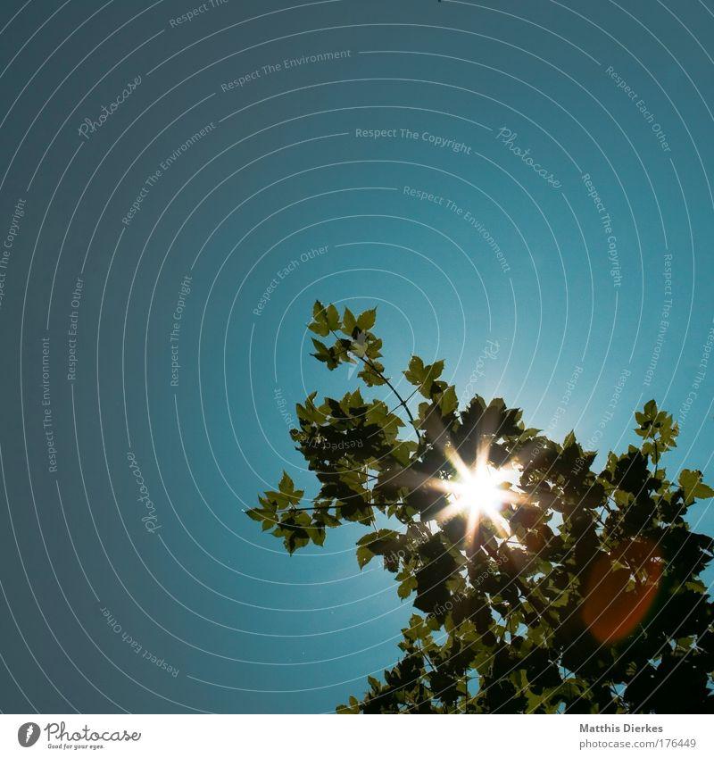 Blattwerk Natur Baum Sonne grün blau Pflanze Sträucher Ast natürlich türkis Baumkrone Blendenfleck