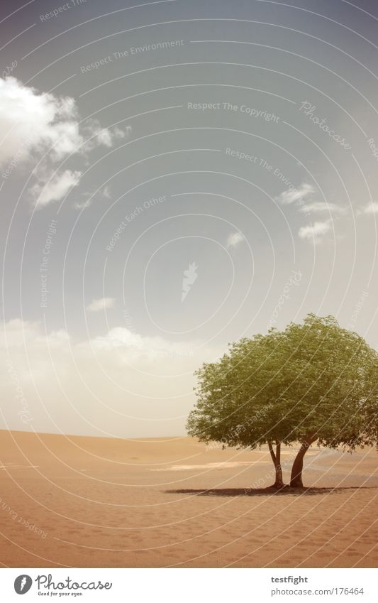 tüdeldingens Farbfoto Textfreiraum oben Umwelt Natur Landschaft Pflanze Tier Urelemente Erde Sand Feuer Himmel Sonne Dürre Wüste Oase Glück Abenteuer tüdeldü