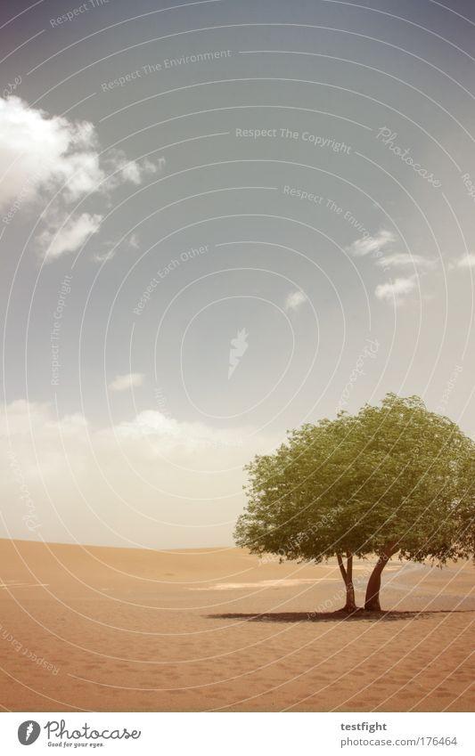 tüdeldingens Natur Himmel Sonne Pflanze Tier Glück Sand Landschaft Umwelt Erde Feuer Abenteuer Wüste Urelemente Dürre Oase