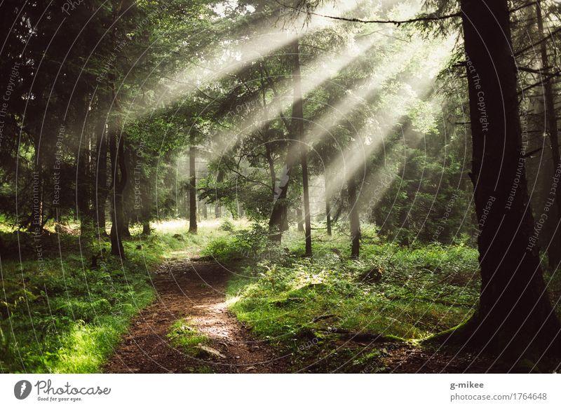 Sonnenstrahlen Umwelt Natur Sonnenlicht Sommer Nebel Wald schön Wärme Abenteuer entdecken Erholung Freiheit Ferien & Urlaub & Reisen Ferne Ziel Thüringer Wald