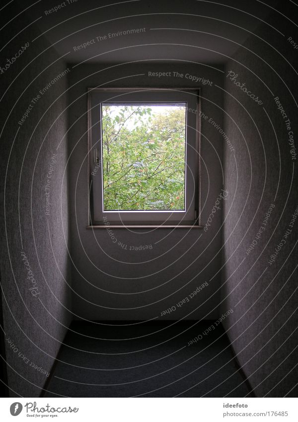 Fenster mit Ausblick weiß schwarz Einsamkeit dunkel kalt Traurigkeit Denken Raum Hoffnung ästhetisch Aussicht bedrohlich Häusliches Leben Kreativität Flur