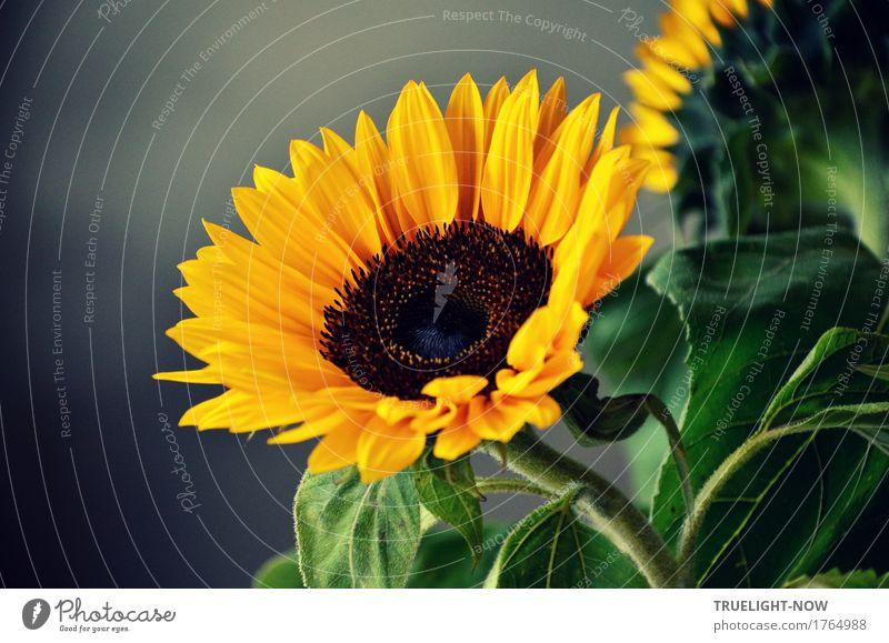 Bevor der Herbst kommt Natur Pflanze grün Sonne Blume Erholung Blatt ruhig Wärme gelb Leben Blüte Lifestyle Stil Glück Kunst