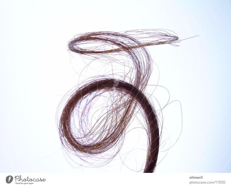 Verlockung I Locken lockig Frauenhaare Haarsträhne Haarschopf Spirale Haarspitze Haarspliss ausgefranst schön geschwungen Vor hellem Hintergrund Freisteller