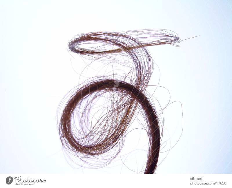 Verlockung I schön Locken Spirale Objektfotografie Haarsträhne lockig geschwungen Haarschopf Haarpflege ausgefranst Frauenhaare Haarspitze Haarspliss Haarprobe