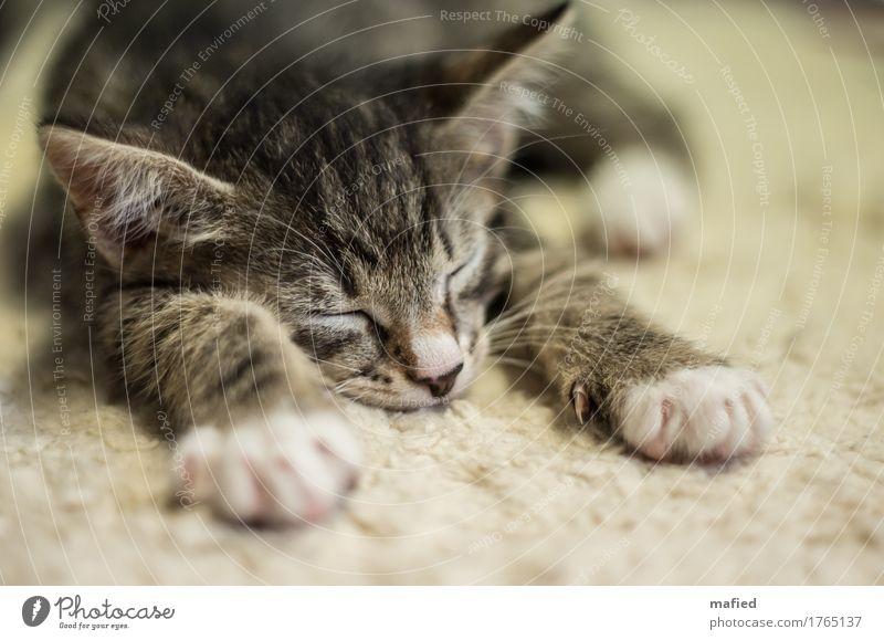 Morris Tier Haustier Katze Fell 1 Tierjunges schlafen kuschlig niedlich braun grau schwarz Vertrauen Sicherheit Tierliebe Hauskatze Kitten Katzenbaby Farbfoto