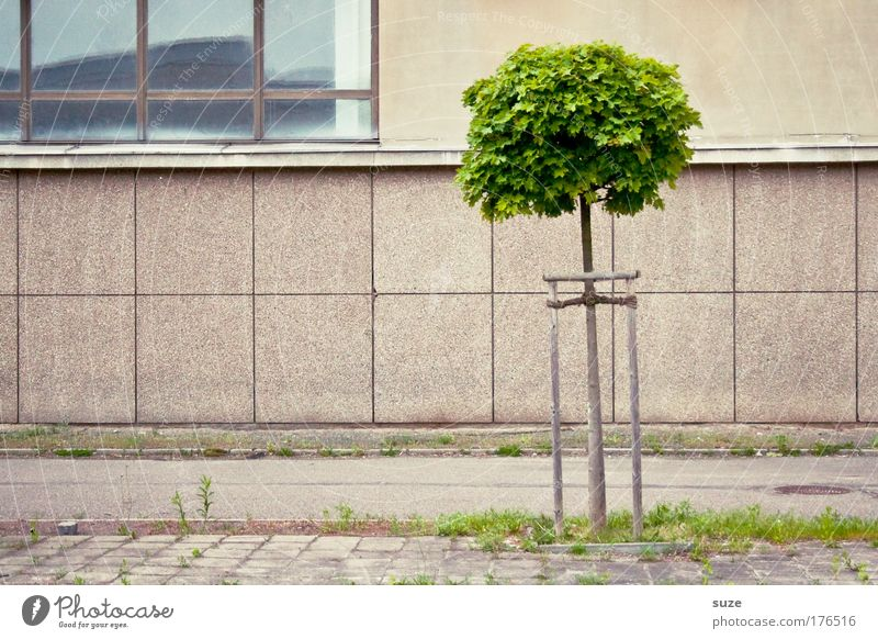 Haltbarkeit Natur Baum Haus Wand Mauer Gebäude Architektur Umwelt Beton Fassade Platz Wachstum einzeln nachhaltig standhaft Jungpflanze