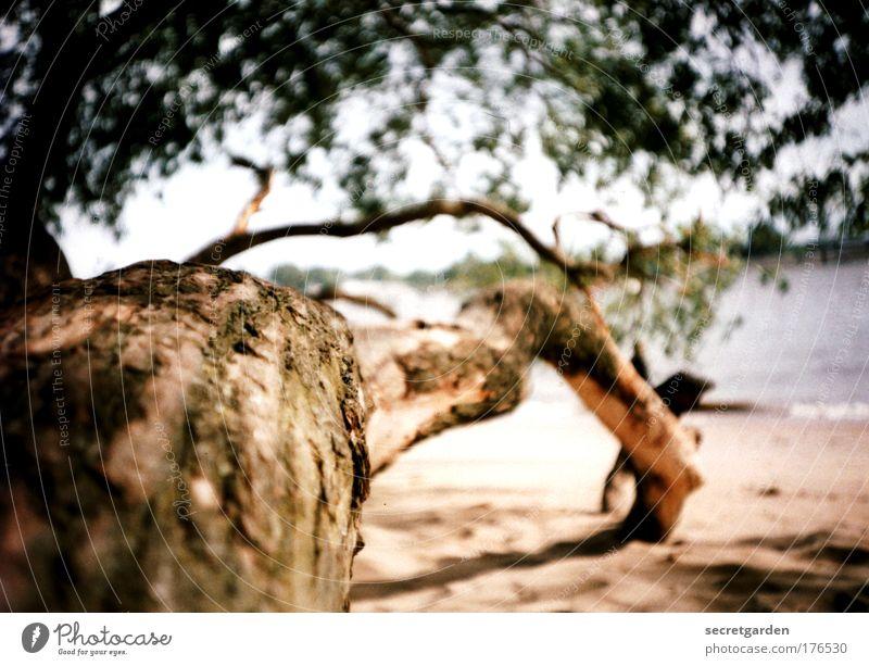 der weg ist das ziel. Natur Ferien & Urlaub & Reisen Baum Pflanze Sommer Meer Strand Freude Erholung Umwelt Holz Wege & Pfade Sand braun Zufriedenheit