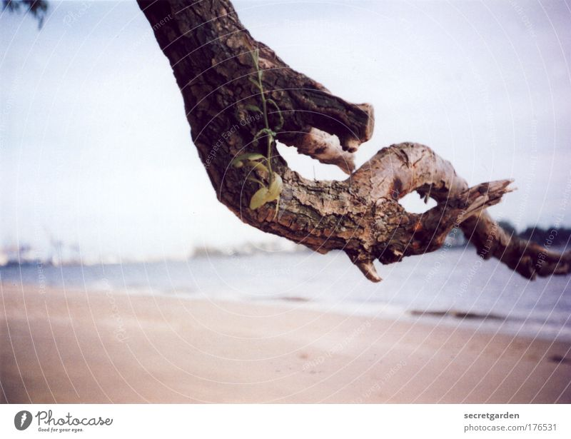 die konzentration auf das wesentliche. Natur alt Baum Pflanze Ferien & Urlaub & Reisen Strand Meer Einsamkeit Ferne Erholung Umwelt Holz Sand braun Horizont elegant