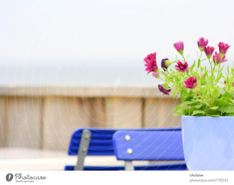 """""""Herr Ober! Ein Alster bitte!""""[Ki09.01] Ferien & Urlaub & Reisen Pflanze blau grün Blume Tourismus Ernährung Fröhlichkeit Kommunizieren warten Tisch genießen Ausflug Lebensfreude Stuhl violett"""