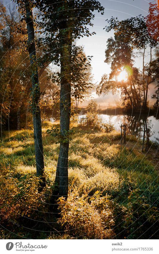 Goldener Morgen Umwelt Natur Landschaft Pflanze Wasser Wolkenloser Himmel Schönes Wetter Baum Gras Sträucher Wildpflanze Bach Sommer leuchten fantastisch