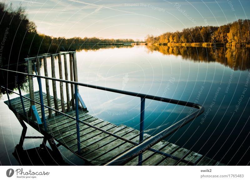 Alter Steg Ausflug Ferne Freiheit Umwelt Natur Landschaft Wolkenloser Himmel Horizont Herbst Klima Schönes Wetter Baum Wald See Olba Lausitz Deutschland Sachsen
