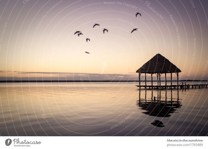 Postkarten-moment Natur Ferien & Urlaub & Reisen Sommer Wasser Meer Landschaft Erholung Tier Ferne Strand Umwelt Freiheit See Vogel Tourismus Horizont