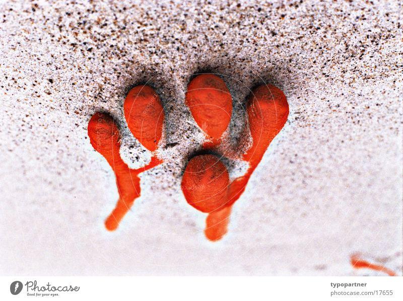 S(h)andschuh Handschuhe Strand Müll vergessen auf dem Kopf Gummi Finger zudecken Europa Sand Wind orange gebraucht alt stylish