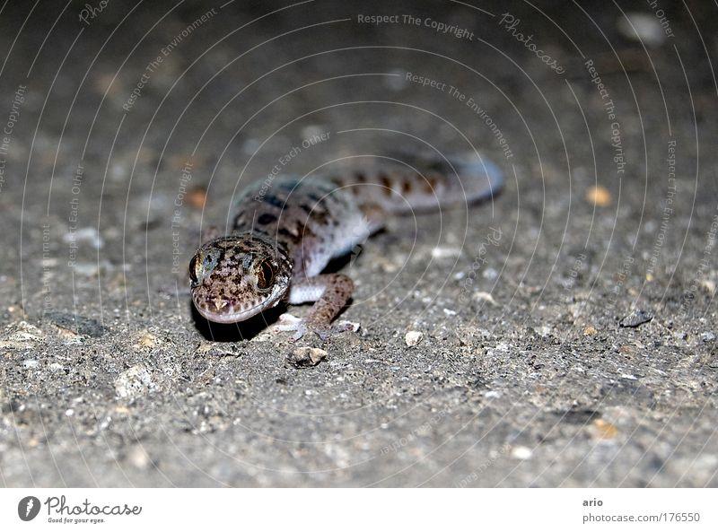 Auge in Auge Natur Ferien & Urlaub & Reisen Tier grau Geschwindigkeit Tiergesicht Neugier entdecken Wachsamkeit