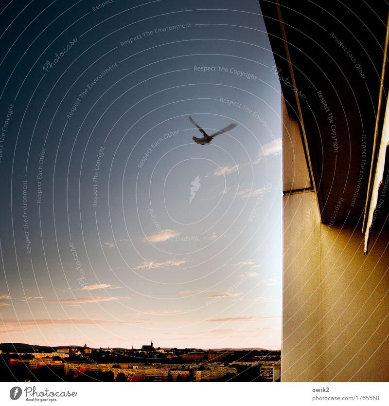 Flatterhaft Tier Himmel Wolken Horizont Sommer Klima Schönes Wetter Bautzen Lausitz Deutschland Kleinstadt Skyline bevölkert Haus Dom Mauer Wand Balkon Taube 1