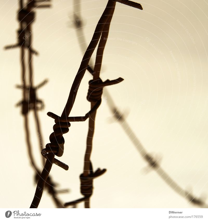 Stacheldraht II Himmel Wolken Freiheit Umwelt Metall Angst gefährlich Sicherheit Schutz Krieg Kontrolle Verbote Zerstörung Aggression Draht stachelig