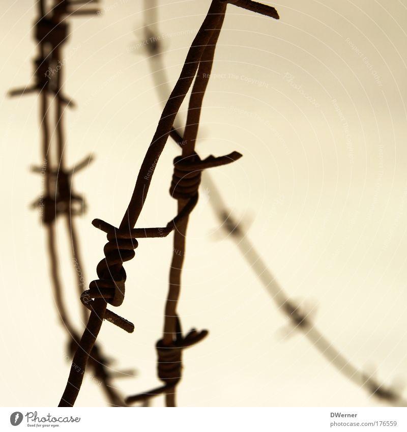 Stacheldraht II Umwelt Himmel Wolken Metall Aggression stachelig Tapferkeit Sicherheit Schutz Angst gefährlich Endzeitstimmung Freiheit Kontrolle Überwachung