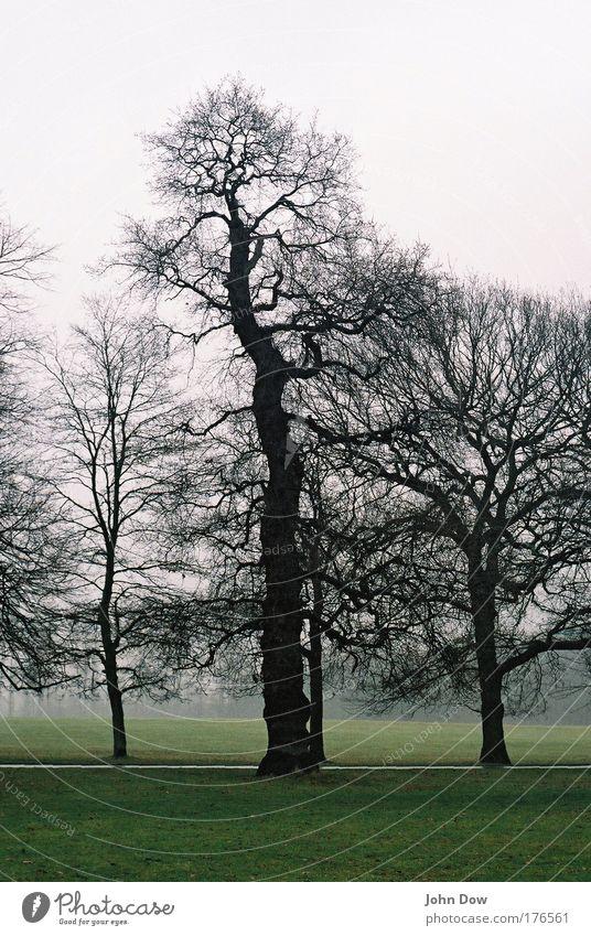 Near Wollaton Hall Gedeckte Farben Kontrast Spaziergang Natur Landschaft Herbst schlechtes Wetter Nebel Regen Baum Gras Sträucher Ast Geäst England