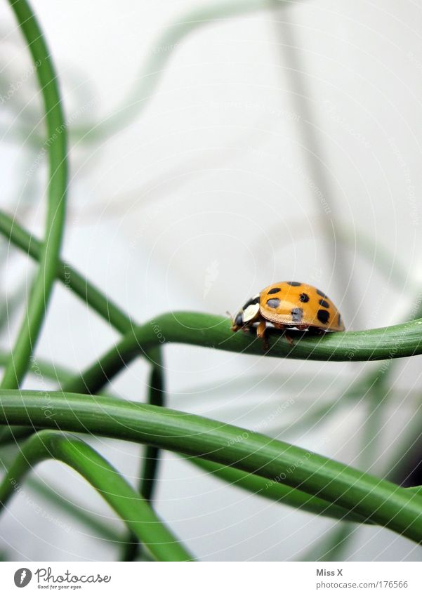 danach flog er weg Natur schön Pflanze Tier Wiese Gras Glück Sträucher Klettern Punkt Marienkäfer Käfer krabbeln gepunktet Glücksbringer