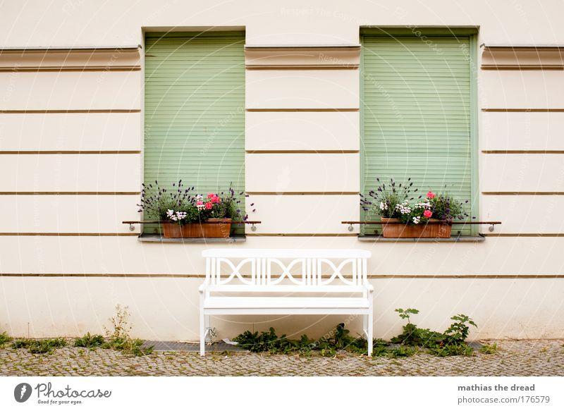 SITZGELEGENHEIT Farbfoto mehrfarbig Außenaufnahme Menschenleer Tag Schwache Tiefenschärfe Pflanze Blume Haus Bauwerk Gebäude Architektur Mauer Wand Fenster