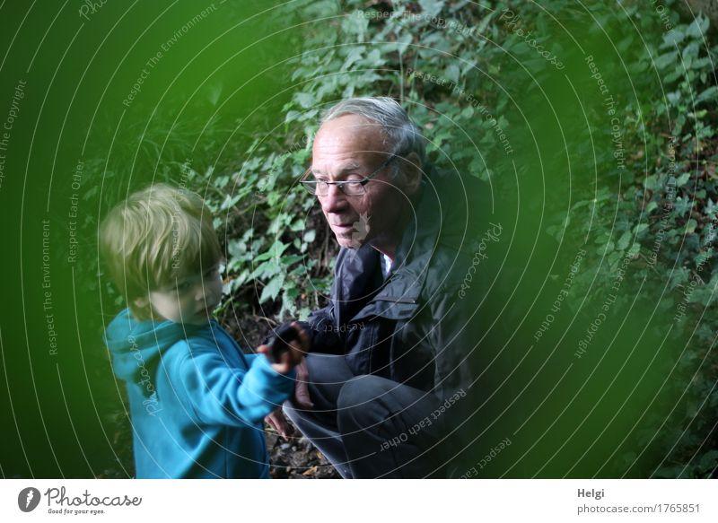 kleiner Junge und sein Opa auf Entdeckungstour im Wald Mensch maskulin Kleinkind Männlicher Senior Mann Kindheit 2 1-3 Jahre 60 und älter Umwelt Natur