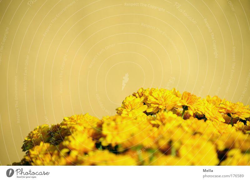 Gelb Farbfoto mehrfarbig Außenaufnahme Nahaufnahme Detailaufnahme Menschenleer Textfreiraum links Textfreiraum rechts Textfreiraum oben Tag Sonnenlicht