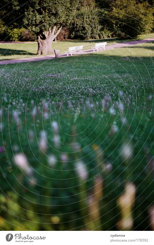 Ruhe finden Farbfoto Außenaufnahme Detailaufnahme Menschenleer Textfreiraum unten Textfreiraum Mitte Tag Abend Schatten Kontrast Sonnenlicht