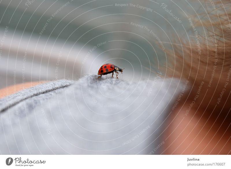Schulterlandung Farbfoto Außenaufnahme Detailaufnahme Tag Tierporträt Glück Haare & Frisuren Umwelt Natur Sommer Stoff Käfer Marienkäfer Glücksbringer