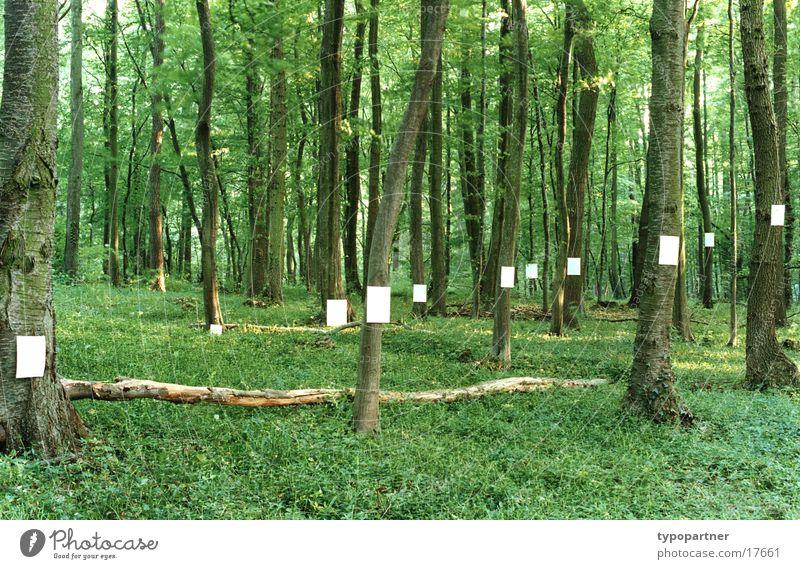 blätterwald Baum grün Blatt Wald Frühling Papier Symbole & Metaphern Zettel Idee