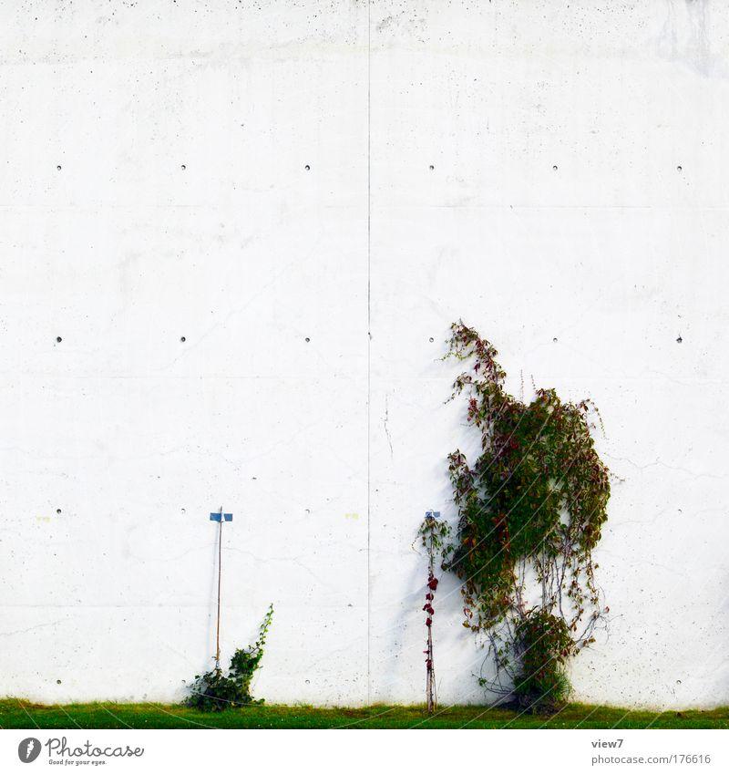 kleine Pflanzenfamilie grün schön Pflanze Blatt Haus Umwelt Wand Gras klein Stein Mauer Metall Linie Kraft Fassade Beton