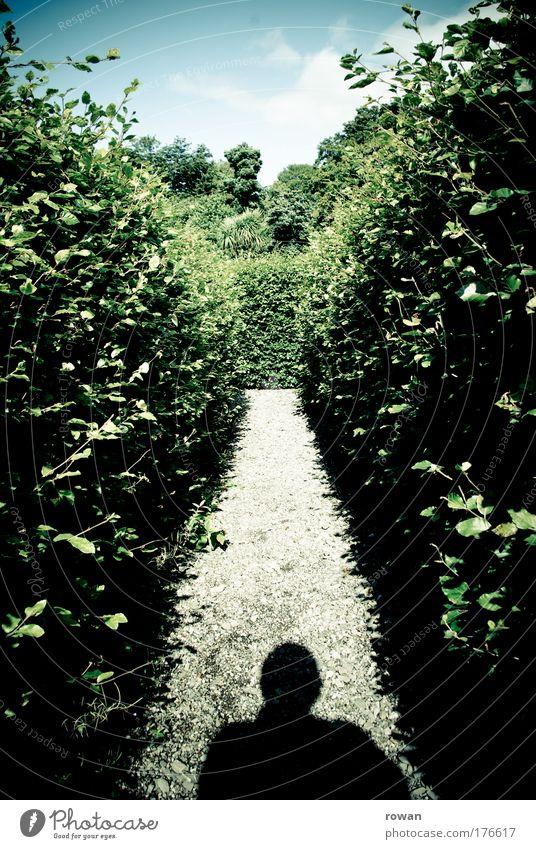 Labyrinth Natur Einsamkeit dunkel kalt Traurigkeit Wege & Pfade Park Landschaft Angst klein gehen Beginn Richtung Zukunft bedrohlich gruselig