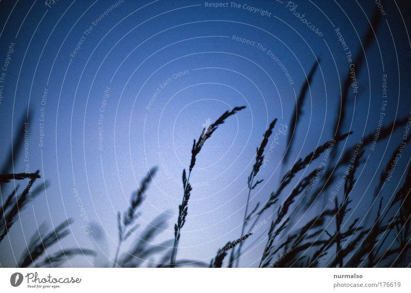 Blue Morning Himmel Natur blau schön Pflanze Sommer Wiese Landschaft Gras Blüte träumen Stimmung Park Kunst Feld Wind