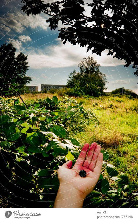 Bio maskulin Hand Finger Umwelt Natur Landschaft Pflanze Himmel Wolken Horizont Sommer Klima Schönes Wetter Baum Gras Sträucher Blatt Wildpflanze Hecke