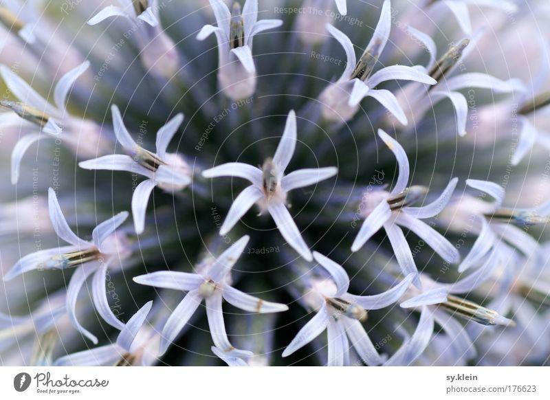 Wer weiß schon, wie sie heißt blau schön Pflanze Blume Freude Wiese Gefühle Frühling Blüte Park Ordnung Wachstum Dekoration & Verzierung einzigartig viele violett