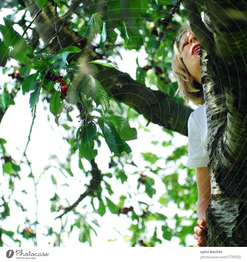 Mit mir ist gut Kirschen essen! Mensch Himmel Natur Hand grün Baum rot Pflanze Mädchen Blatt Gesicht Kind Leben Ernährung Garten Kindheit