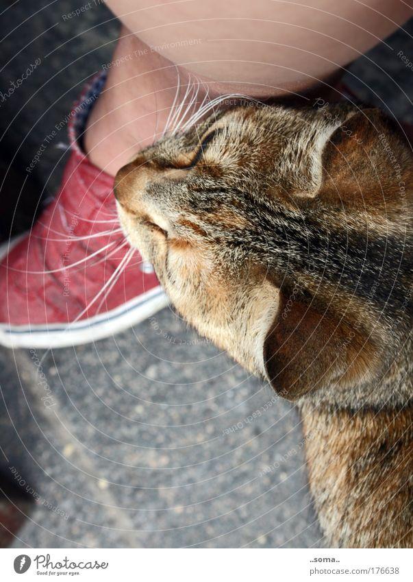 Katze fühlt ruhig Tier Leben Gefühle Fuß Beine nah weich Frieden natürlich Fell berühren Gelassenheit genießen kuschlig