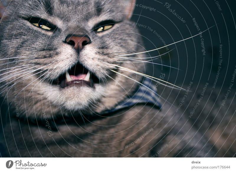 Felis Silvestris Catus Farbfoto Nahaufnahme Morgen Blitzlichtaufnahme Starke Tiefenschärfe Weitwinkel Tierporträt Blick nach vorn Haustier Katze Tiergesicht