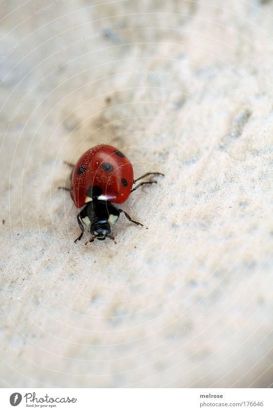 Farbtupfer Natur rot Freude Leben Glück träumen klein fliegen frei Hoffnung Lebensfreude berühren Schönes Wetter Käfer krabbeln