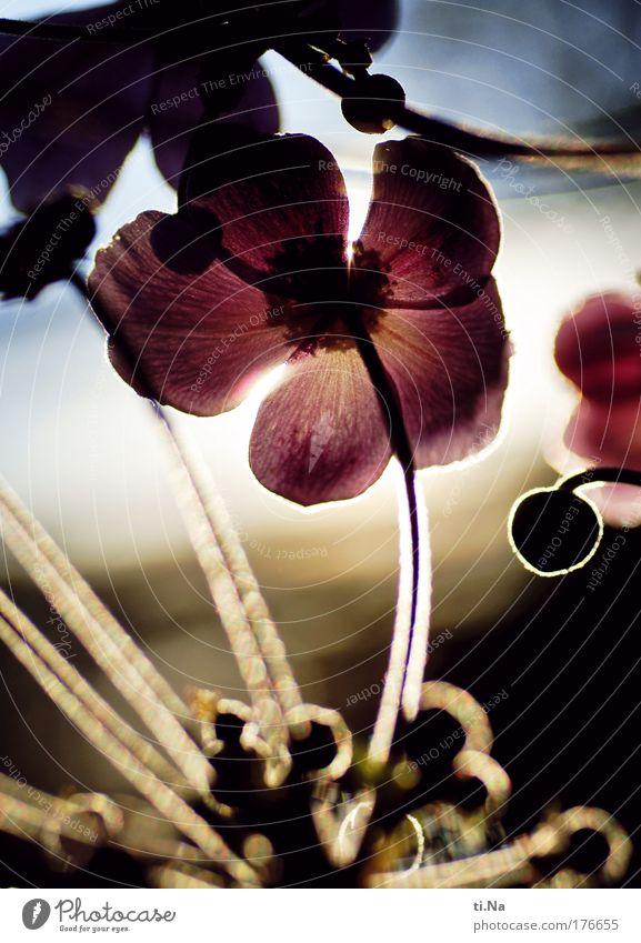 Sommerblumenfarben Natur Pflanze Tier Wiese Blüte Park Landschaft Feld Umwelt Wachstum Sträucher Blühend Duft Schönes Wetter Sonnenuntergang