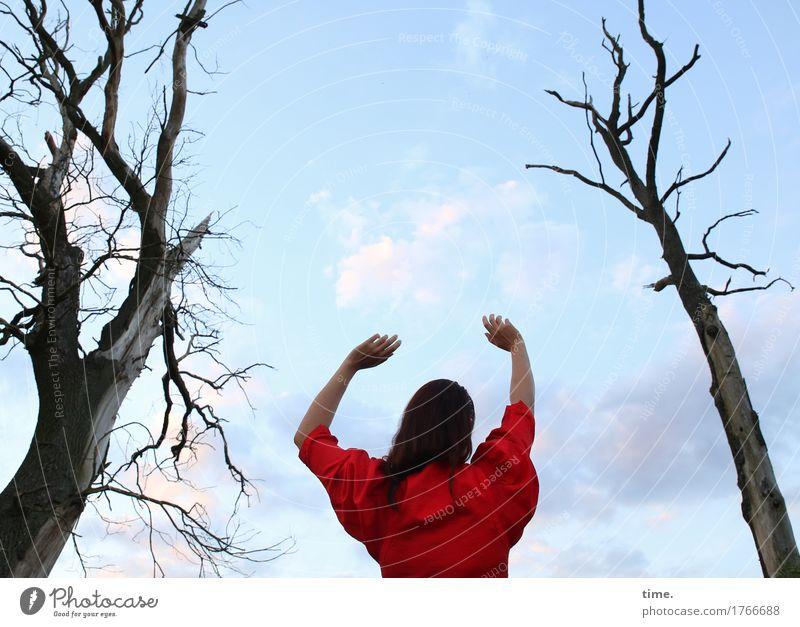 . Mensch Natur Baum Einsamkeit Ferne Leben Gefühle Bewegung feminin Zeit Kommunizieren stehen Schönes Wetter bedrohlich Hoffnung Schutz