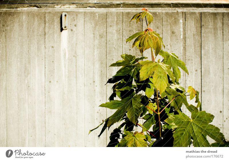 NATUR vs. STRUKTUR Natur alt grün Pflanze Sommer Blume Blatt Wiese kalt Wand Umwelt Landschaft grau Gras Mauer Frühling