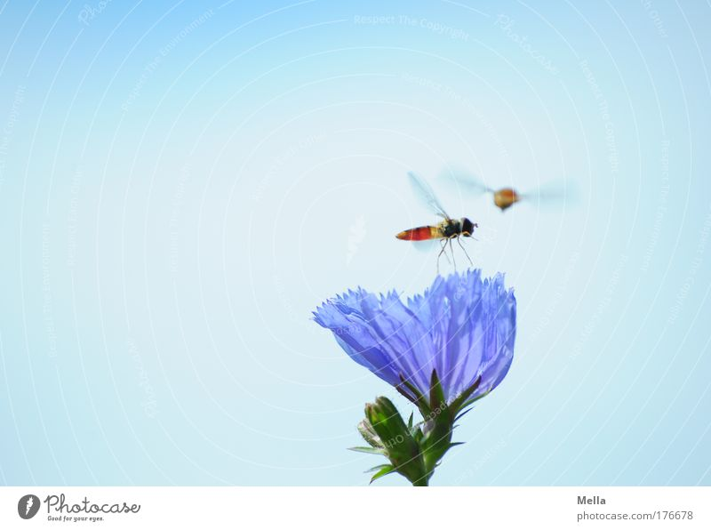 Geh ma wech da Natur Blume blau Pflanze Sommer Tier Wiese Blüte Bewegung Freundschaft Stimmung Zusammensein Feld Fliege Umwelt fliegen