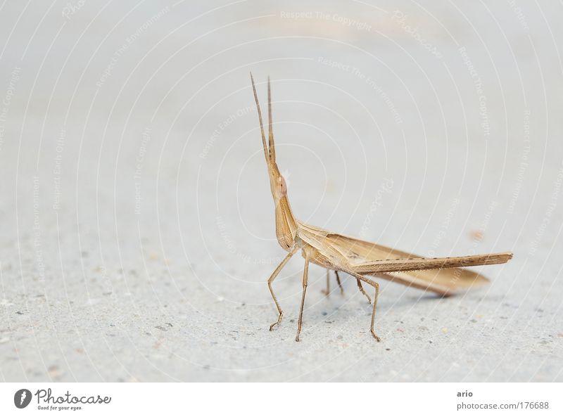 Origami? Natur Tier gelb braun gold Beton Insekt fantastisch Spitze Freundlichkeit exotisch Käfer