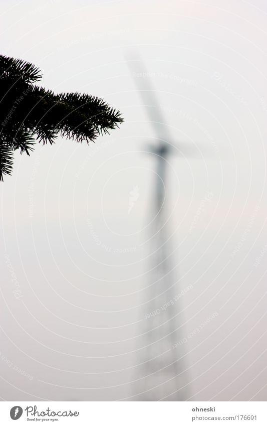 Windenergie Natur Himmel Baum Pflanze Wolken grau Umwelt Energiewirtschaft Technik & Technologie Klima Windkraftanlage Tanne Umweltschutz Klimawandel