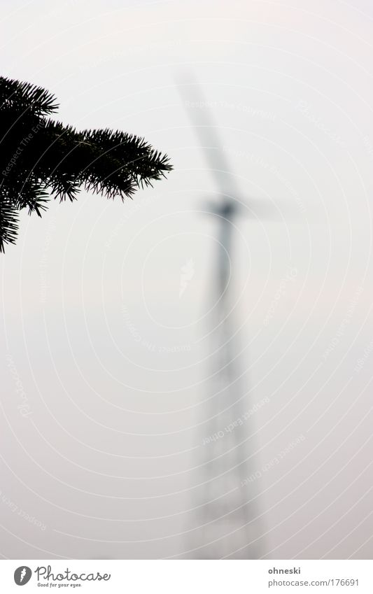 Windenergie Natur Himmel Baum Pflanze Wolken grau Wind Umwelt Energiewirtschaft Technik & Technologie Klima Windkraftanlage Tanne Umweltschutz Klimawandel Grünpflanze